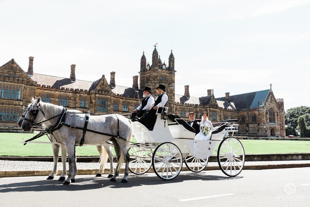 horse carriage wedding